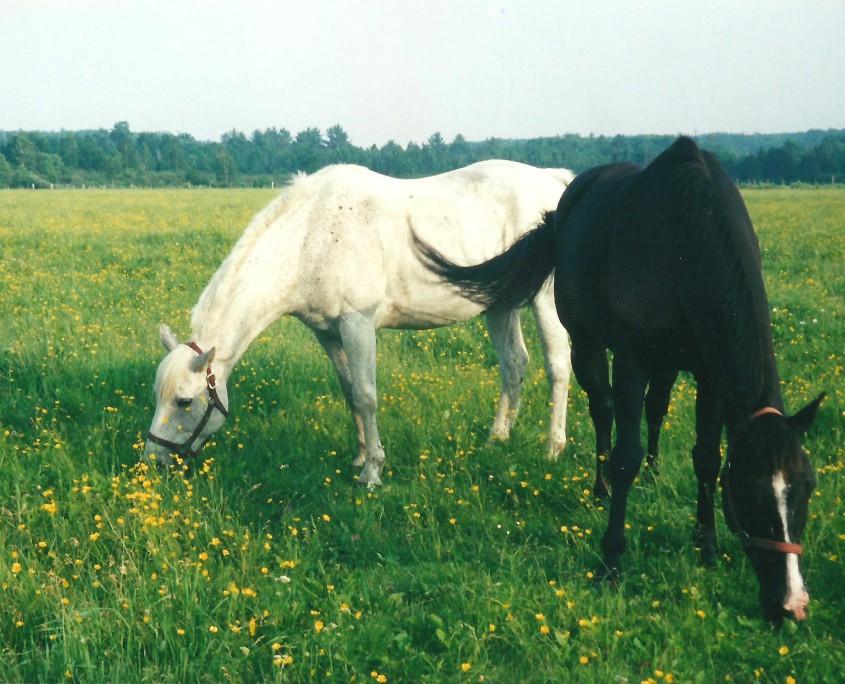 Ranch Rudolf Horses