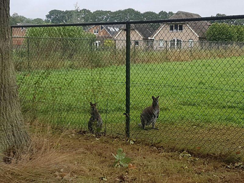 KangarooKlarenbeek